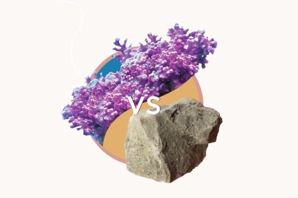 拒絕吃礦石,要補鈣一定要選植物鈣質!為什麼海藻鈣吸收比普通礦石鈣更好呢?